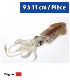 Calamar 1er choix : Calamar 4P