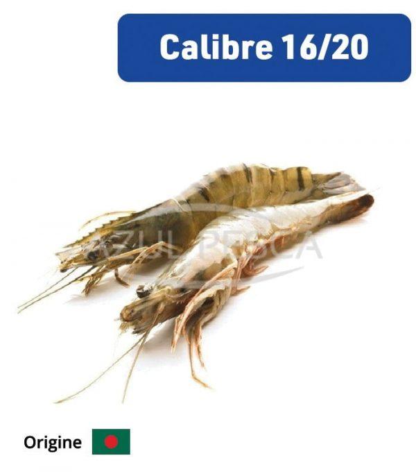 Crevettes Grises 16-20 p/Kg