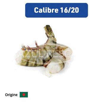 Queue de Gambas Black Tiger 16/20