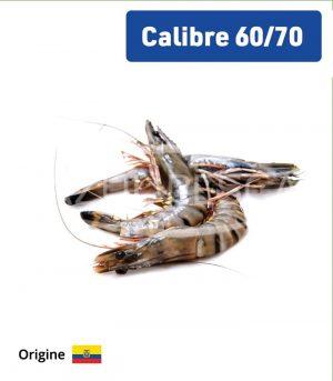 Crevettes Grises 60-70 p/Kg